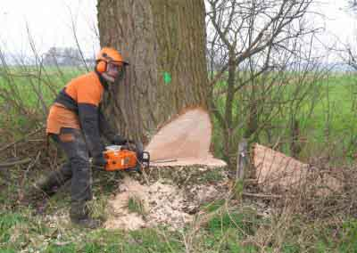 Bos- en boomverzorging