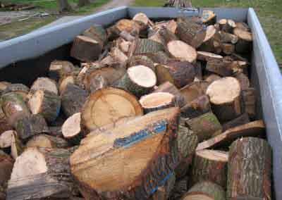 Haardhout boomstammen tegen aantrekkelijke prijzen 1