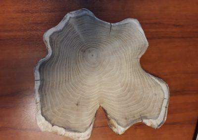 Originele boomstamschijf uit duurzaam beheerde bossen 5