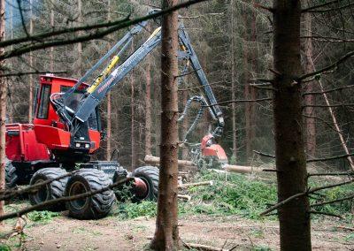 Bosbouwbedrijf 3